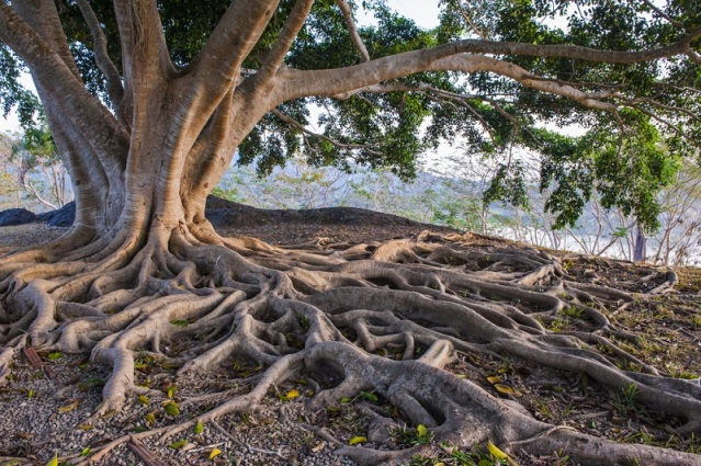 tree-with-deep-roots-image-source-siambizkit/Shutterstock.com